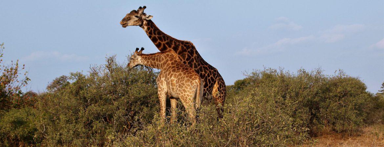 12 Days Adventure in Uganda