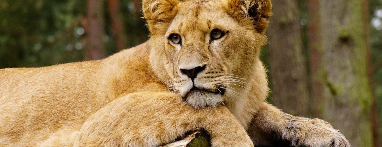 16 Days Uganda All-Round Safari