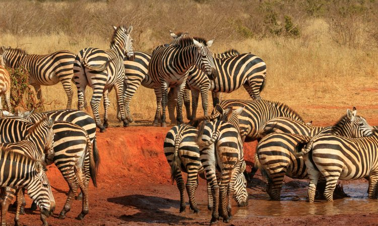 25 Days Grand Uganda Holiday