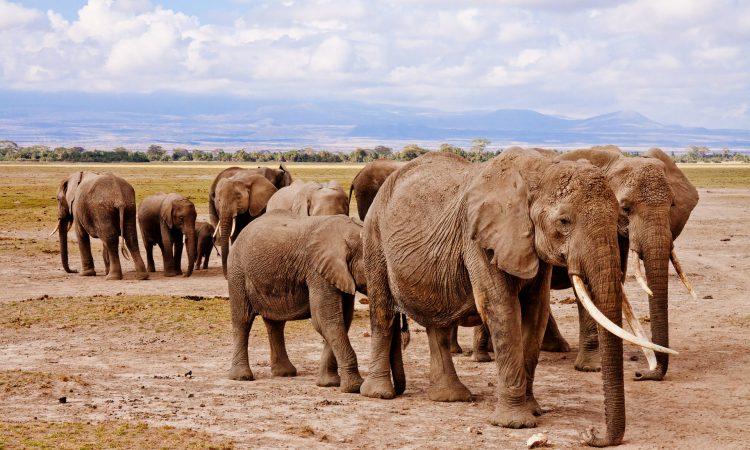 3 Days Amboseli Wildlife Safari