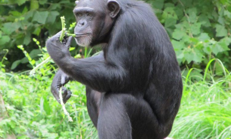 3 Days Nyungwe Primates Safari