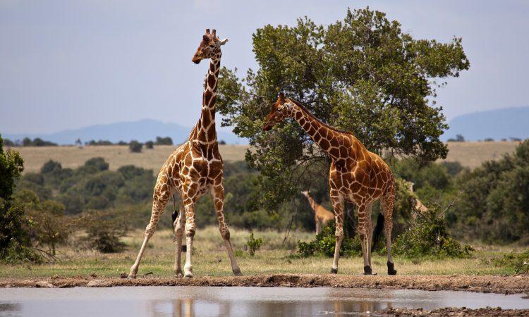 3 Days Samburu Game Safari