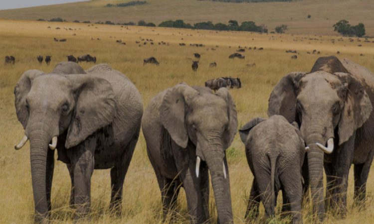4 Days Masai Mara & Lake Nakuru Wildlife Safari