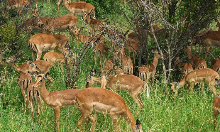 5 Days Kenya Wildlife Special Safari