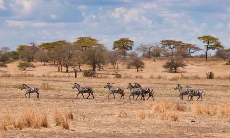5 Days Tarangire & Serengeti Wildlife Safari
