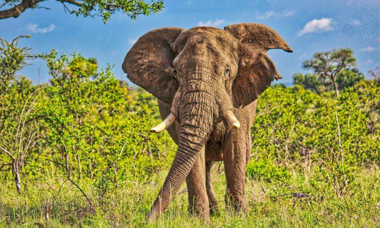 6 Days Classic Uganda Safari