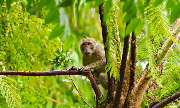 7 Days Rwanda Primates & Mt Bisoke Adventure