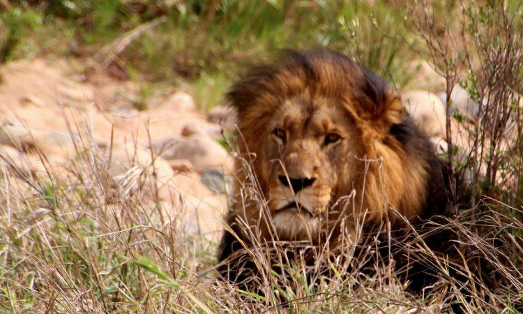 9 Days Prime Kenya Safari