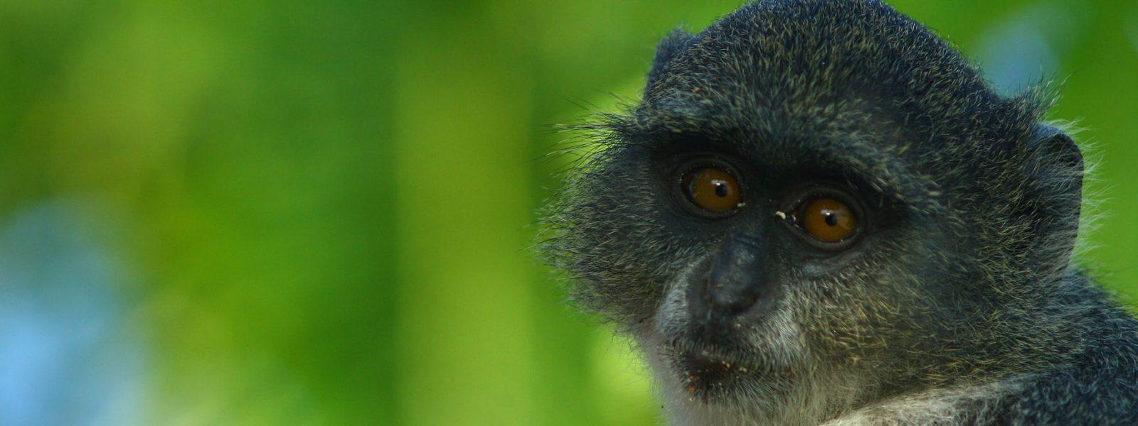 Budget Safaris Uganda